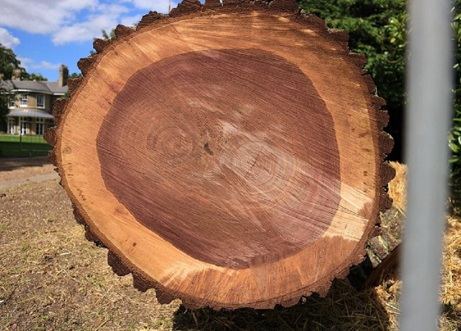 gỗ óc chó là gỗ cứng
